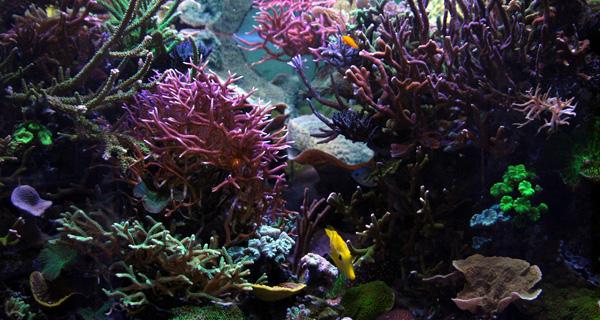 Eclairage Led Alpheus Aquarium Recifal Alpheus Led