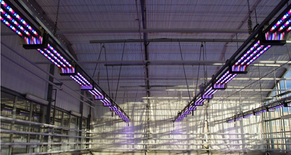 eclairage led horticulture inra