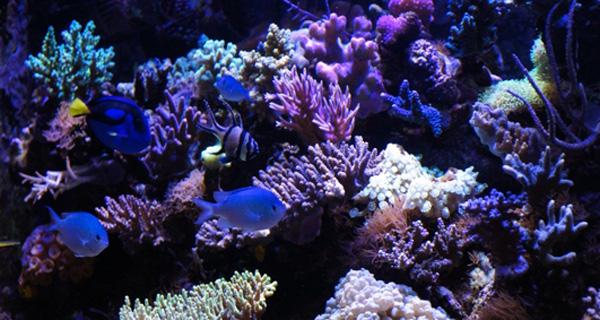 Eclairage Led Aquarium Recifal Eau Douce Et Mono Specifique