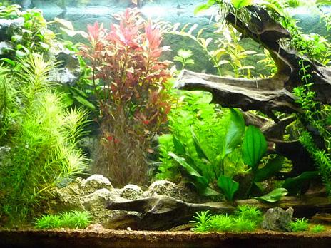 eclairages led pour aquarium ou serre alpheus led. Black Bedroom Furniture Sets. Home Design Ideas