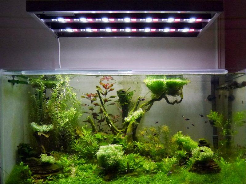 Eclairages Led Pour Aquarium Ou Serre Alpheus Led