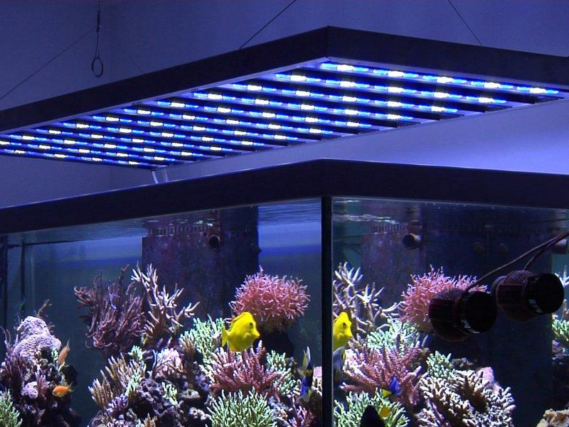 Faq alpheus led - Eclairage led aquarium ...