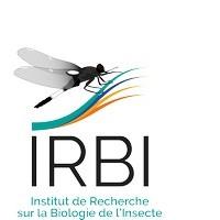 IRBI (Client alpheus)